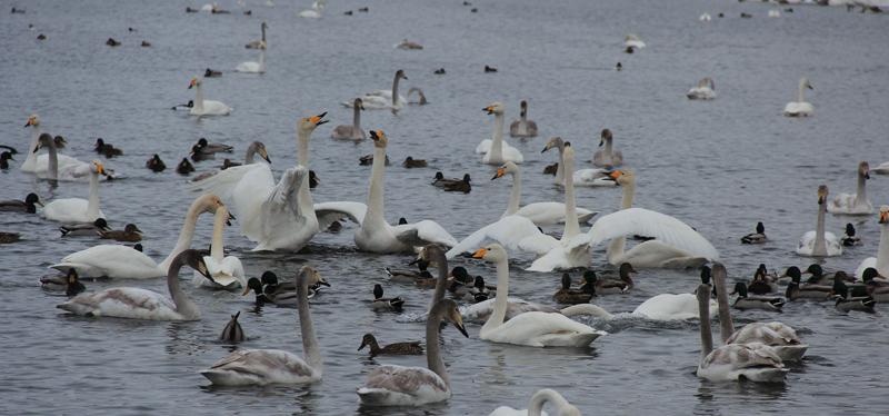 Озеро Лебединое на Алтае